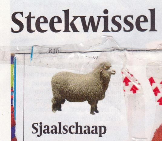 sjaalschaap_NEW